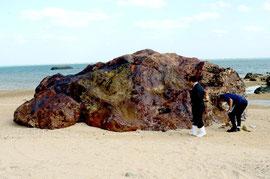 国の天然記念物に指定される「安良大かね」。火山岩の一種の流紋岩で鉄分が多いため赤く見える。記録では、明和の大津波で50㍍以上移動したとされる=安良海岸。