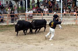 恒例のナイター闘牛に大勢のファンが詰め掛け、迫力満点の取り組みを見つめた=八重山闘牛場