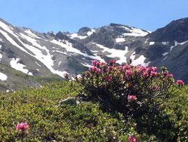 Geierjoch Anstieg ab Lizumerhütte