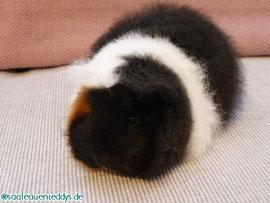 CH-Teddy, schwarz-rot-weiß