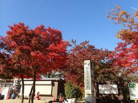 高尾山 紅葉 2019 11月