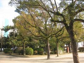 広島城の北側 中国放送本社の裏