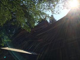 初夏の日差しの社殿