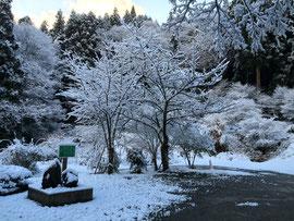 初雪の境内