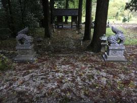 杉の葉や折れ枝などが散乱した境内