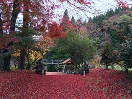 願望成就の赤絨毯