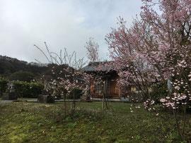 袋原神社の桜