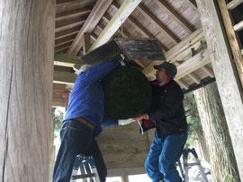 新しい大福杉玉の取付け作業