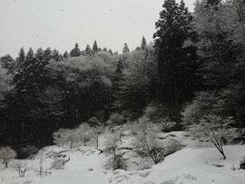 旧正月 雪景色の境内眺望