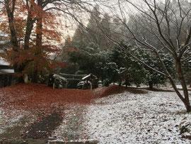 紅葉の落葉と雪景色