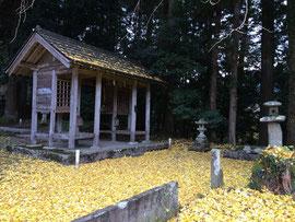 金運上昇の黄金絨毯