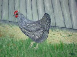 La poule grise de MaDo