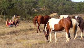 塔美拉居民視馬為擁有靈魂的生命個體, 並藉由和馬的互動來療癒人心。