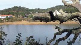 樸門永續生活設計專家席普.厚慈設計的人造湖。