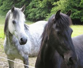 Wir kommen zum Ponyhof aus Köln, Bergisch Gladbach und Umgebung und haben viel Spass!