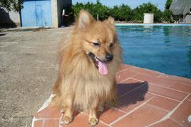 Hakku en la piscina