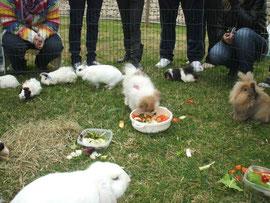 - Akane rodeada de conejos y cobayas, comiendose sus verduras.