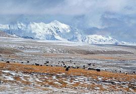 Tibetisches Hochplateau (China)