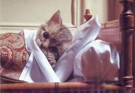 風邪引きちう・・・
