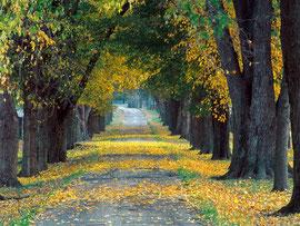 «И будет там большая дорога, и путь по ней назовется путем святым: нечистый не будет ходить по нему; но он будет для них одних; идущие этим путем, даже и неопытные, не заблудятся». Исаия 35:8.