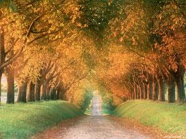 «и уши твои будут слышать слово, говорящее позади тебя: «вот путь, идите по нему», если бы вы уклонились направо и если бы вы уклонились налево». Исаия 30:21.