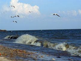 Азовское море Таганрогский залив