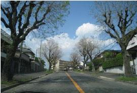 合歓(ねむ)の木道