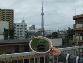 寺島なすと東京スカイツリー