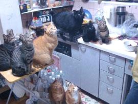 ネコ全員集合