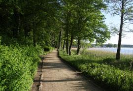 Engelschen Garten in der Nähe von Wohnlust