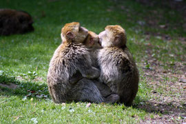 Affenfamilie im Affenwald