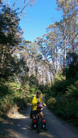 Solche einsame Waldwege waren leider selten und wenn, dann viel zu kurz.