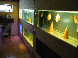 (c) 2-hand-aquaristik.de