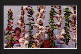 写真は専属カメラマンの撮ったプーリアの風景です。