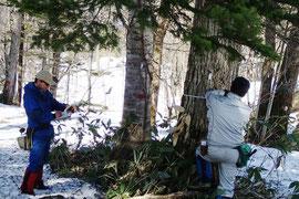 照査法試験林での毎木調査