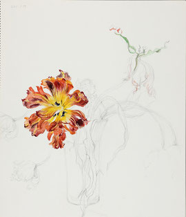 Faded Tulips 萎れたチューリップ, Monte orange (Pencil drawing, Watercolor painting,Dessin)