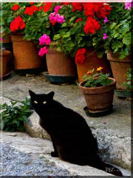 Gatto con fiori