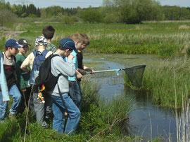 LBV-Kreisgruppe Neu-Ulm Kinder Schüler Weiher Kescher Umweltbildung Naturschutz Obenhausen Ried