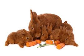 Ernährung Kaninchen