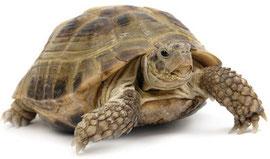 Tipps zur Haltung Ihrer Schildkröte