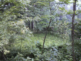 写真は武蔵御嶽神社内にある太占儀式用の禁域