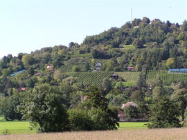 Der Tüllinger Berg bei Lörrach ist das wichtigste Gebiet für die Zaunammer in Südbaden