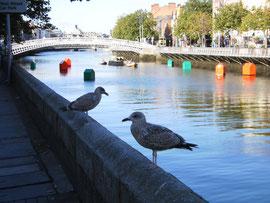 Dublin, Liffey. (c) Ni Gudix