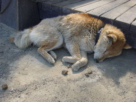 動物福祉協会栃木支部川崎様提供写真