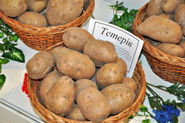 Картофель Тетерев