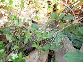 草のなかのクモの巣