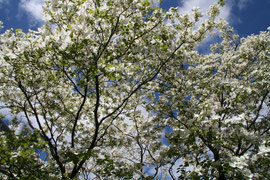 весна 8 марта