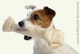Нужно ли давать собаке кости?
