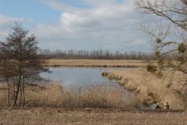 Blick auf einen der Teiche im NSG Wagbachniederung (Foto: I.Ottusch)