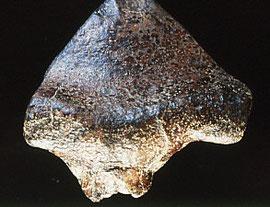 1995年:インドネシア共和国人類遺跡調査